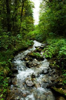 Forest Streams by Maltese-Naturalist