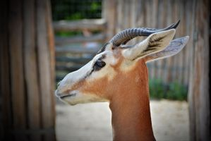Zoo 062g by Placi1