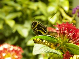 Butterfly 3 by iJustRodeYourBicycle