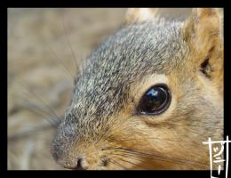 Spring Is Here: Fox Squirrel 2 by MagicalMelonBall