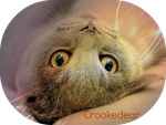 .:Crookedear Edit:. by Son-Of-A-Beech