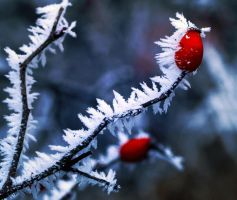 Winter Frost by Tseng-Akera