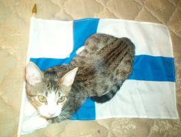 Iceland...with finland's flag? by starclanwarrior0909