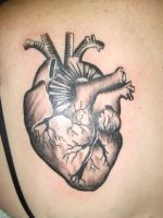 anatomical heart by bryanlangley