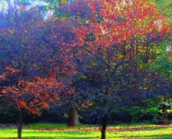 Colorful Dogwoods by bewilderedconfused