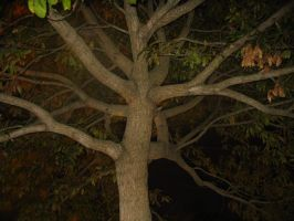 Night time Tree by twofortheprice