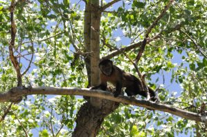 Monkey in Tree by Razgar