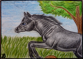 ACEO No.6 by Faejala