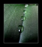 water drops by SpeJa