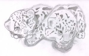 Snow leopards by Etotekuro