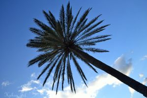 Date Palm by WorldsInWorld