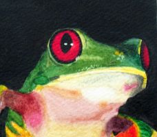 Red Eyed Tree Frog Detail by Reptile64