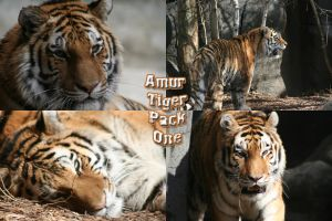 Amur Tiger Pack -1 by Seductive-Stock