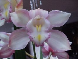 Orchids3 by HrhLaura