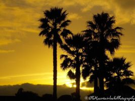 Palm tree Silhouette by OneofakindKnight