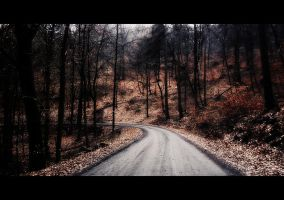 road in the woods by Weissglut