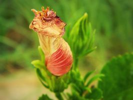 wilting -snail- flower by bloody-magpies