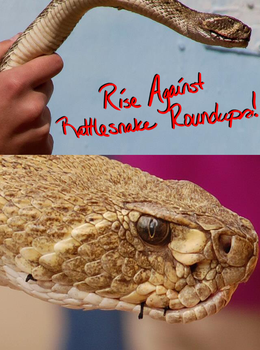 Rise Against Rattlesnake Roundups by Scene-Star
