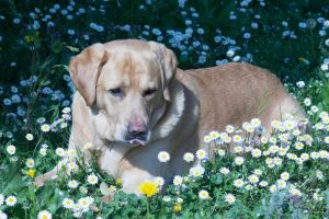 dog and daisy by Berry1894