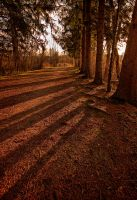Shadow Trees by braxtonds