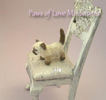 Snooks - Kitten Miniature by Mary Anderson by PawsofLoveMinis