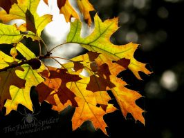 Golden Leaves - Autumn 2015 by TheFunnySpider