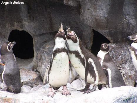 Penguins by AngelicWolves