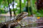 Little Water Dragon by tylorwestside