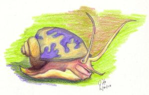 snaiL by silverbamboo