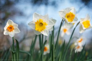 Easter Bloom by dandelgrosso