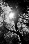 Trees by musicismylife2010