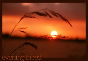 evening in red by gr4y-inu