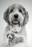 Commission - Golden Oldie 'Jake' by Captured-In-Pencil