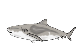 Bull shark by FlyingFox-Bat