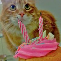 birthday kitty by cutemuffinNn