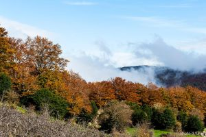 Autumn in Nebrodi mountains.21 by rebelblues