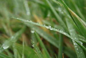 And more Grass by xMaritjee