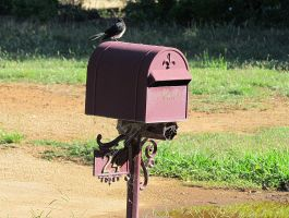 You've Got Mail by scentedglitter