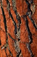 Red Bark by MarieLoup