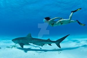 Shark File 1: Large Sharks and Shallow Water by Namyr
