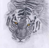 Tiger by punxnotdead309