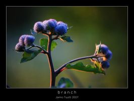 Branch by theFouro