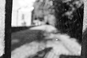 Spider's Web by PhotographyisArt123