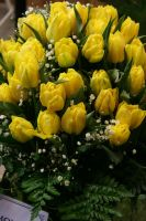 Yellow Tulips by hunny21-stock