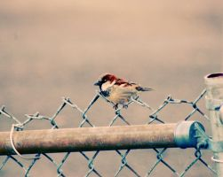 Sparrow by cassetteject