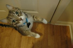 Willis, the silly kitty cat by Mon-Papillon