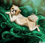 Maya the shih tzu by akreon