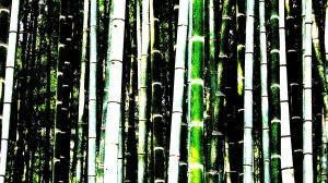 bamboo 3 by Saphiel89