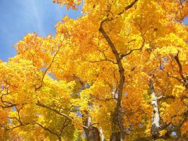 colors of fall by jkegler23