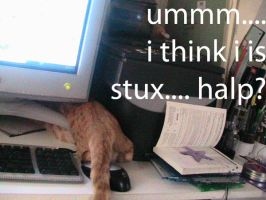 lolcats: stux by Psycheen